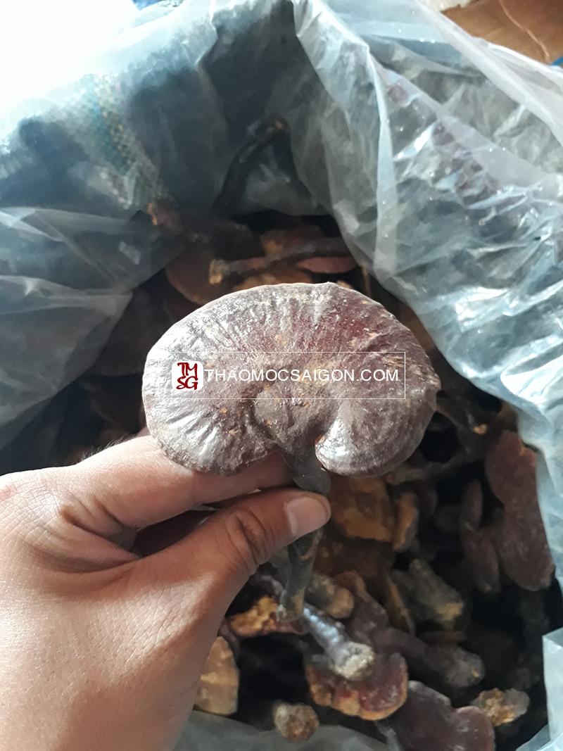 Nấm Lim Xanh Rừng Nguyên Mũ - Bán Nấm Lim Rừng TP HCM